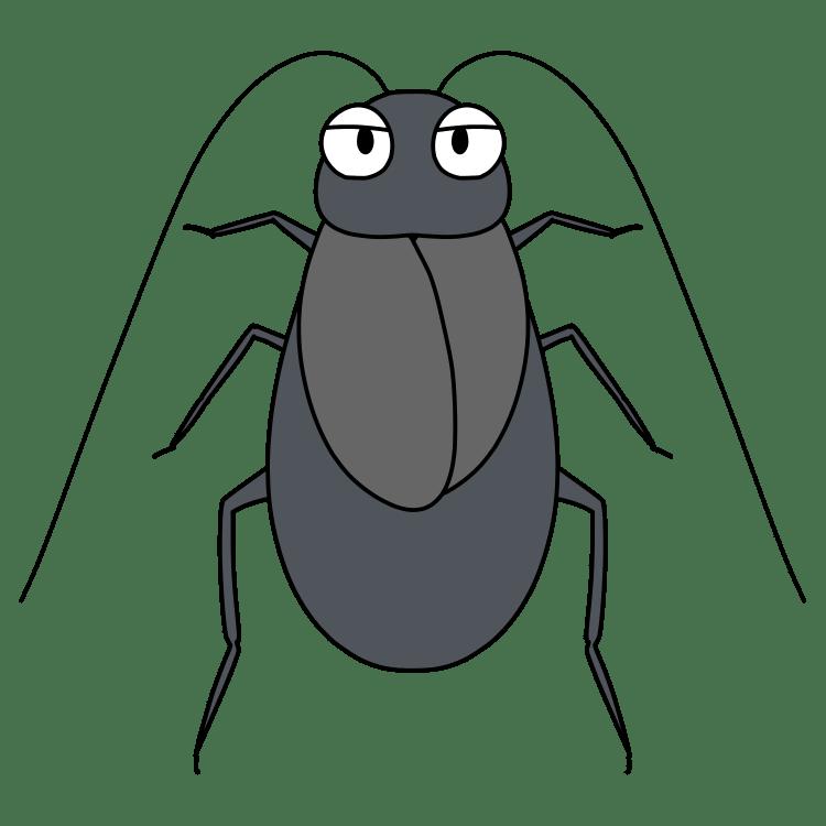 ヤマトゴキブリ