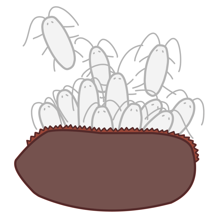 卵から孵化する幼虫ゴキブリ