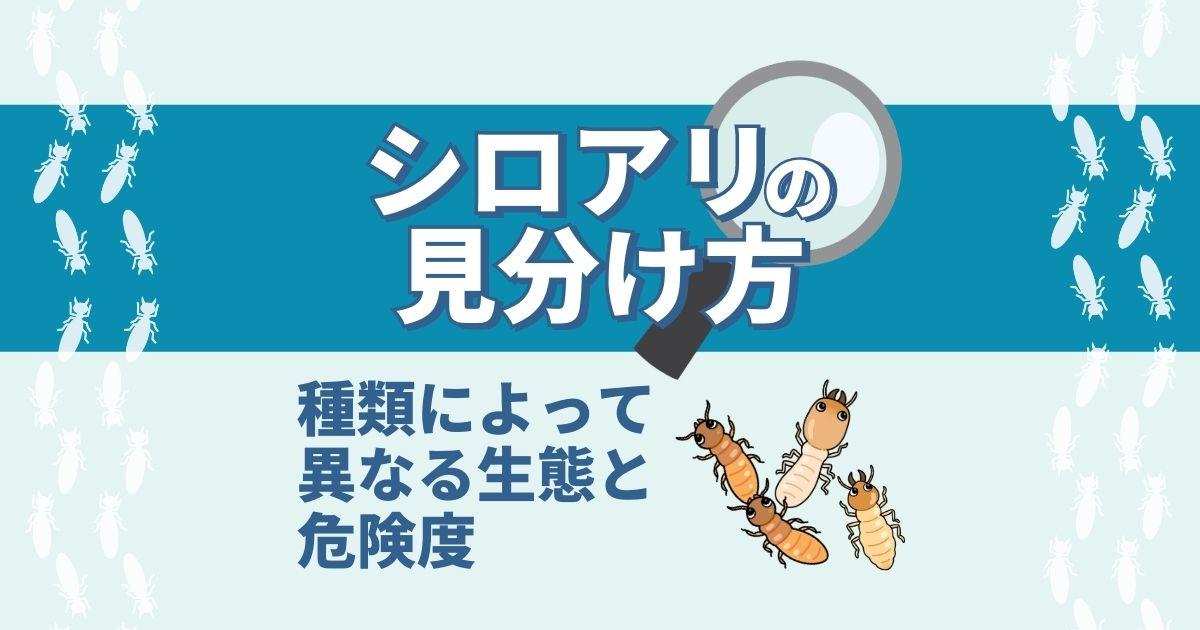 シロアリの見分け方 種類によって異なる生態と危険度