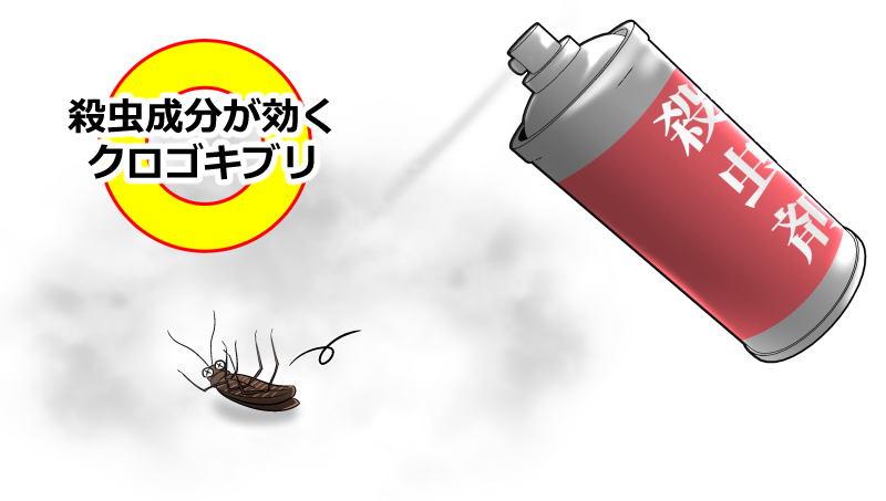 殺虫成分が効くクロゴキブリ