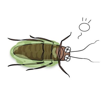 窒息死するゴキブリ