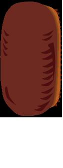 ワモンゴキブリの卵鞘
