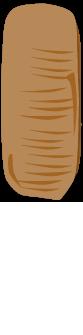 チャバネゴキブリの卵鞘