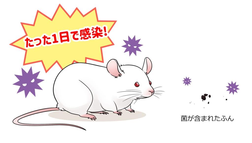 菌が含まれたふんとマウスを共存させるとたった1日で感染した