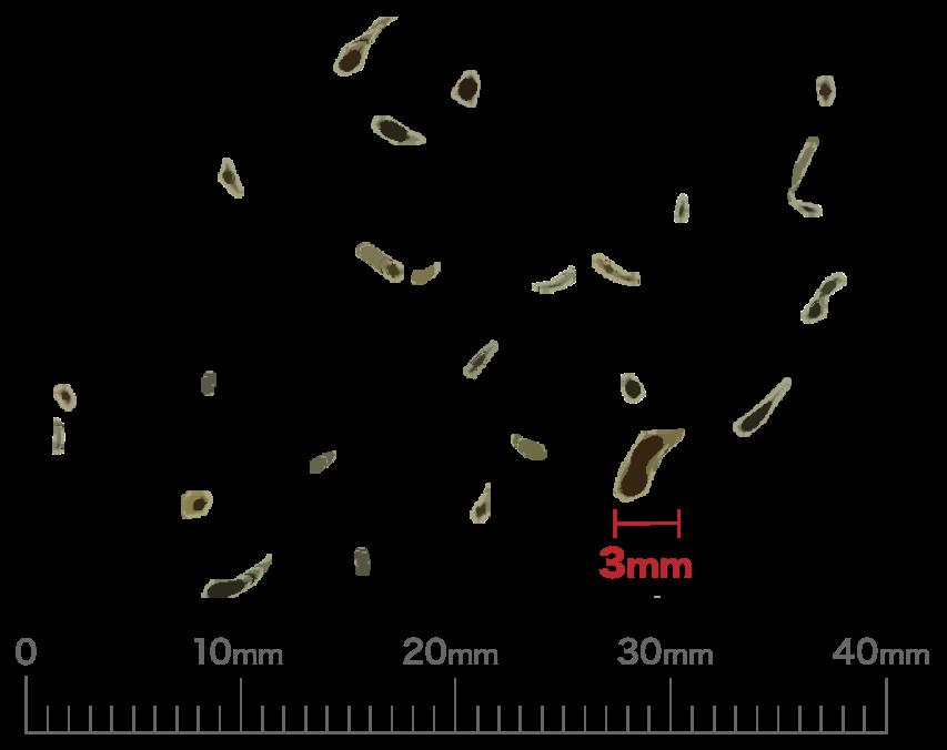 チャバネゴキブリの3mm程度のふん(液状)の写真