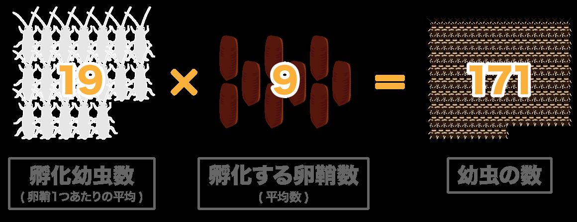孵化幼虫19匹×孵化する卵鞘9個=幼虫171匹