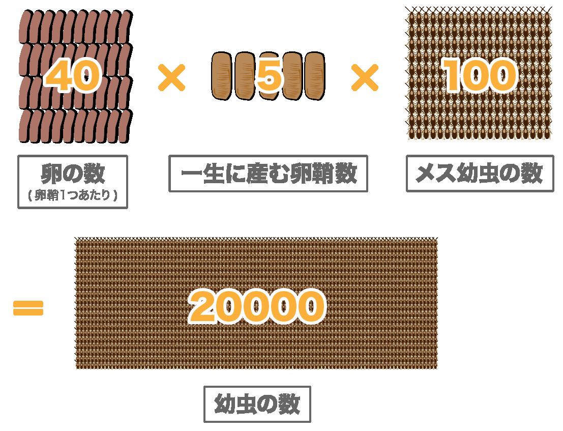 卵鞘一つに入った卵の数40個×卵鞘5個×メスの幼虫100匹=幼虫20000匹