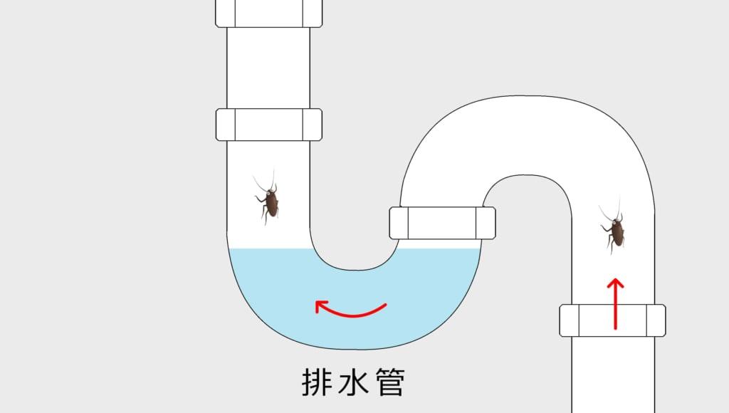 排水管のS字トラップを潜って進むゴキブリ