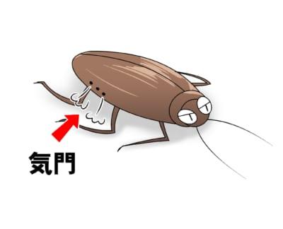 ゴキブリの呼吸孔(気門)