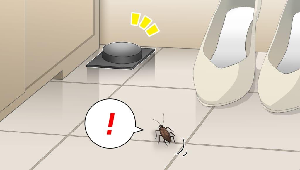 靴箱に設置したベイト剤に気づくゴキブリ