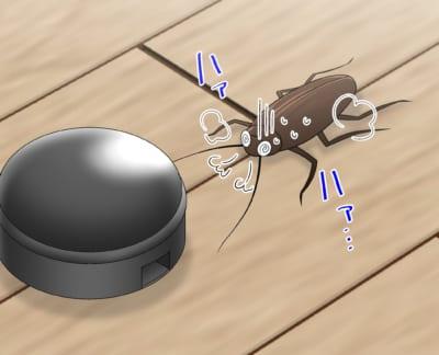 ヒドラメチルノン系ベイト剤付近で死にかけのゴキブリ