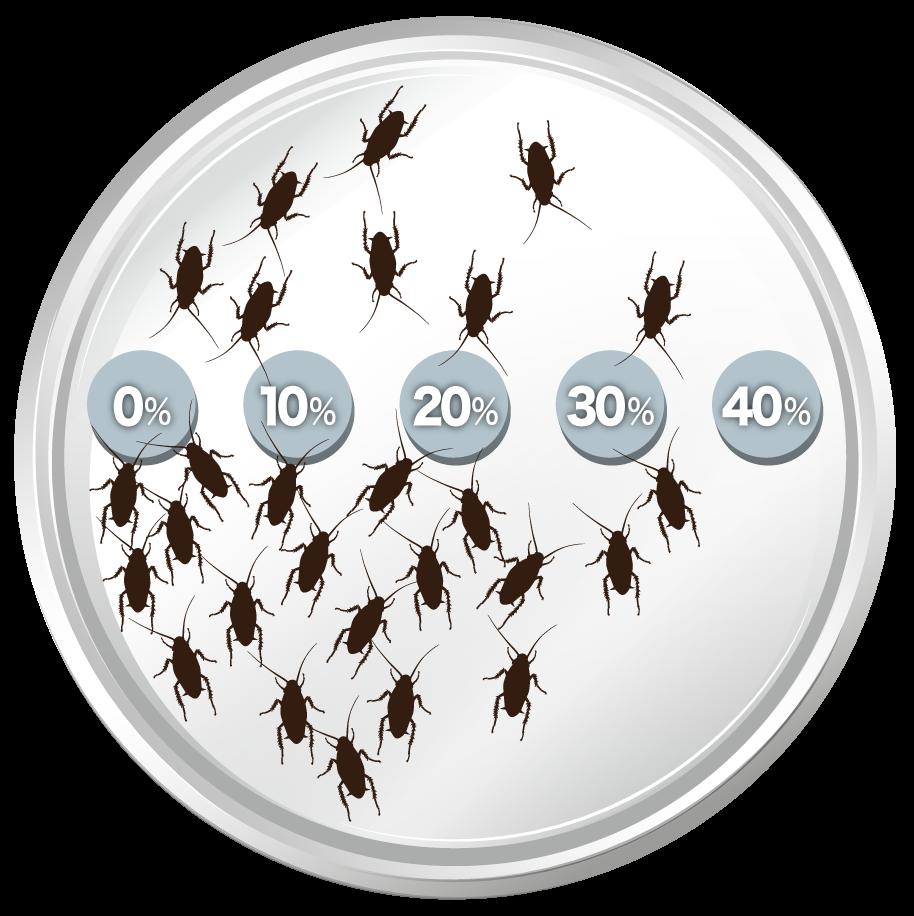 ホウ酸を0~40%含んだ5種類のホウ酸団子とチャバネゴキブリを複数入れた容器A