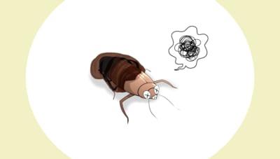 脱皮に失敗するゴキブリ