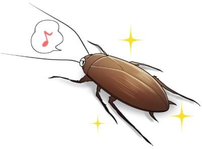ゴキブリの見た目