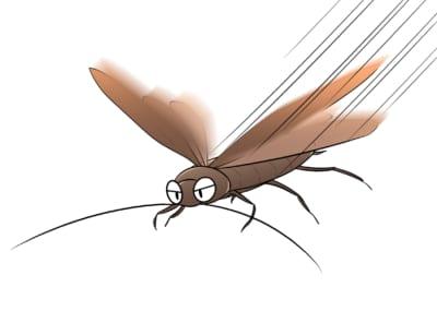 飛んでいるゴキブリ