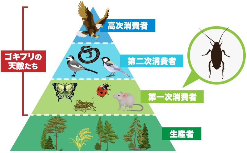生産者、第一次消費者(ゴキブリ含む)、第二次消費者、高次消費者があり生産者以外は全てゴキブリの天敵たち