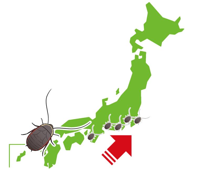 北上して生息地を拡大する熱帯・亜熱帯性のゴキブリ
