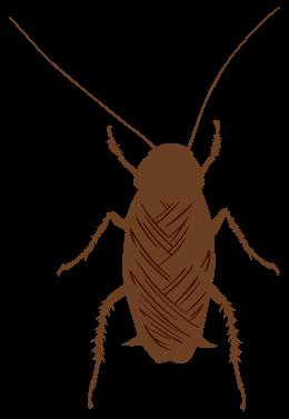 トビイロゴキブリ