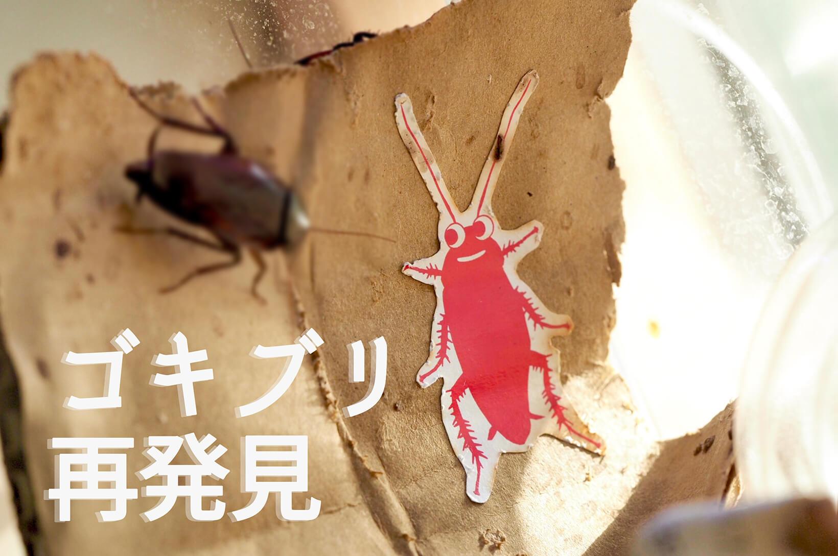ゴキブリのイラストとゴキブリ