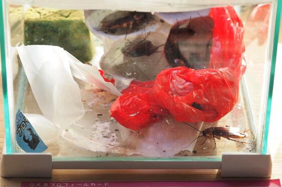 ゴミ置き場をイメージした展示ケースにいるゴキブリ
