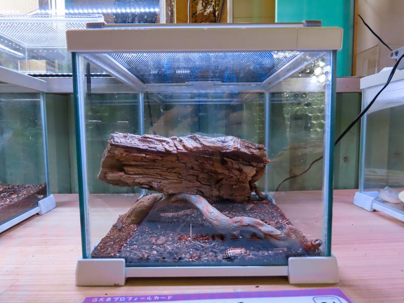 ゴキブリを展示するためのケース