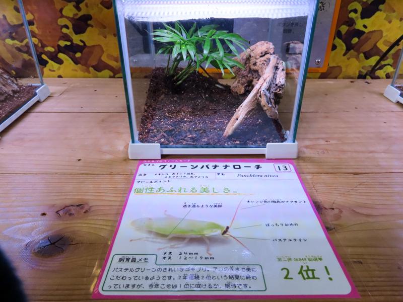 グリーンバナナローチの展示ケース
