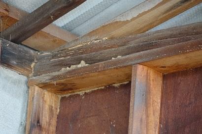 蟻土(ぎど)の詰まった木材