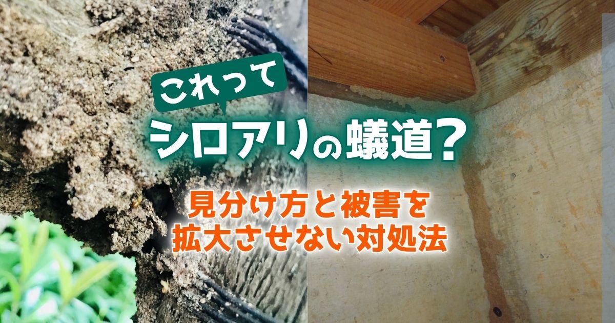 これってシロアリの蟻道?見分け方と被害を拡大させない対処法