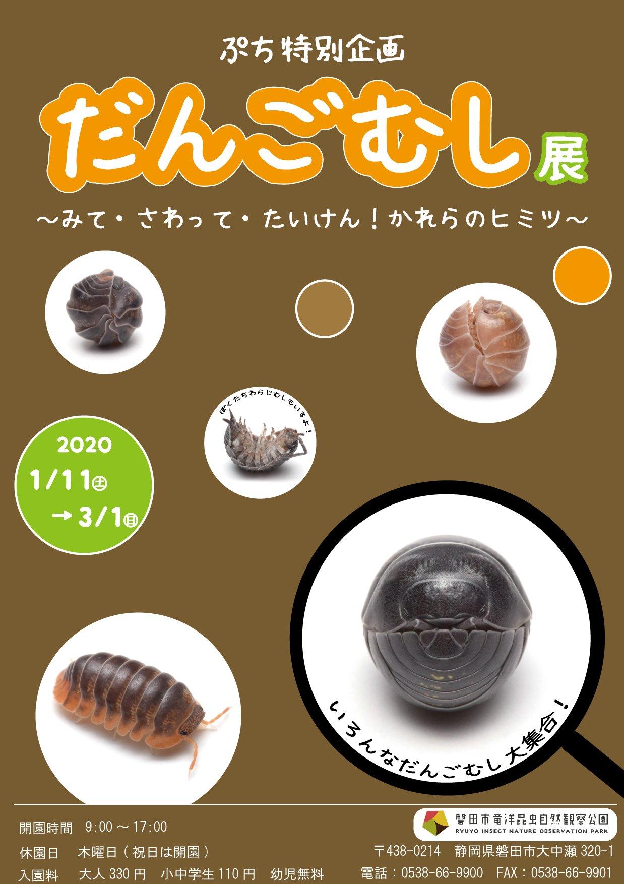 ダンゴムシ展ポスター