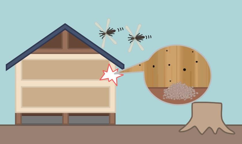 アメリカカンザイシロアリの巣