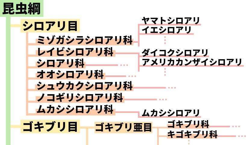 シロアリ目の系統図
