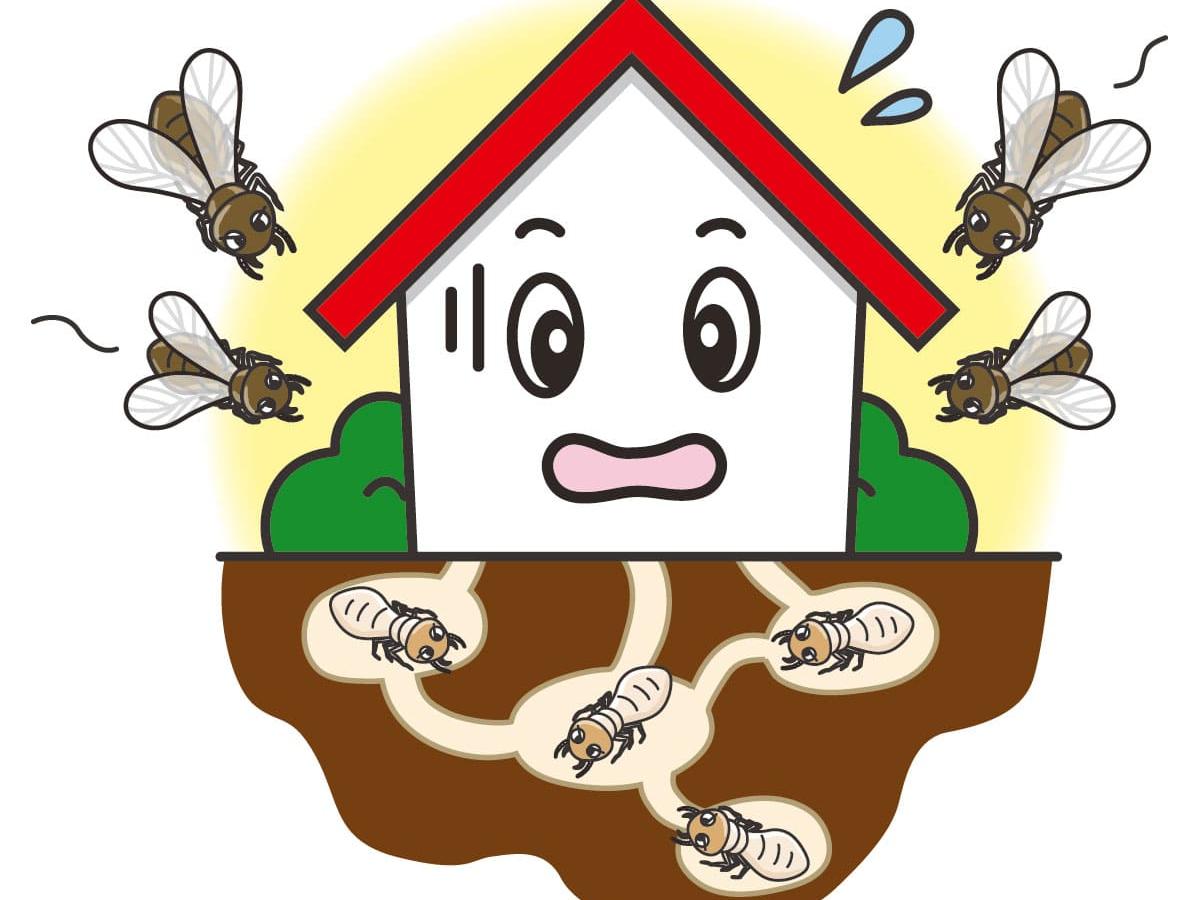 シロアリに対して無防備な家
