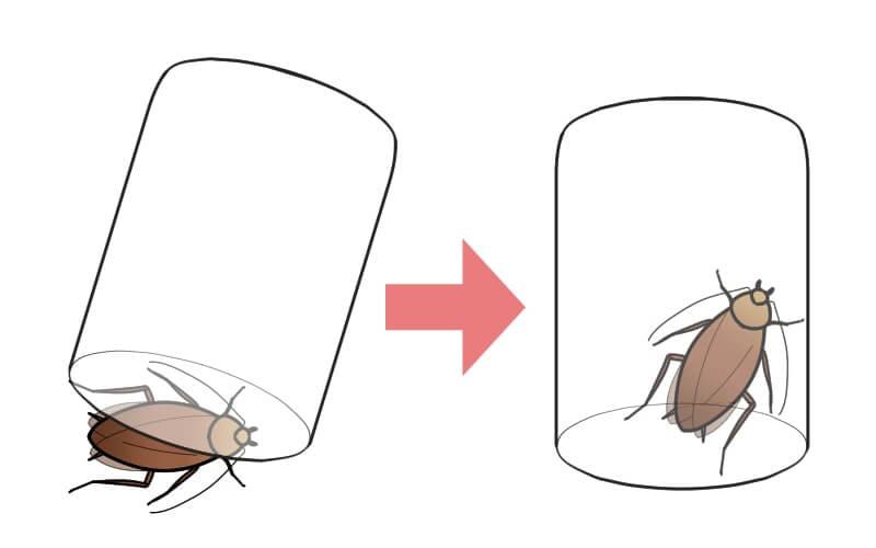 フィルムケースでゴキブリを採集する様子