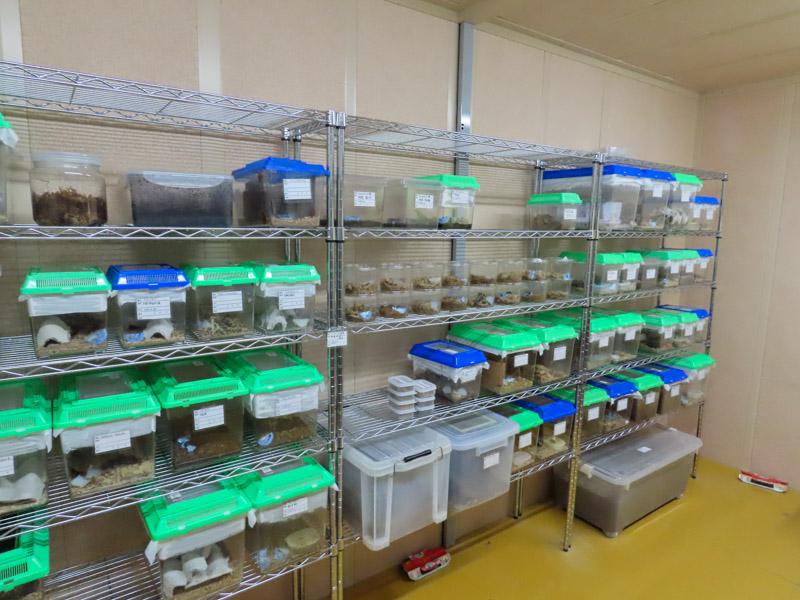 磐田市竜洋昆虫自然観察公園のゴキブリ専用飼育室の棚