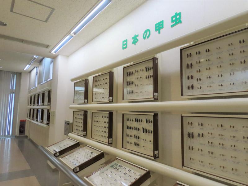 磐田市竜洋昆虫自然観察公園の標本展示
