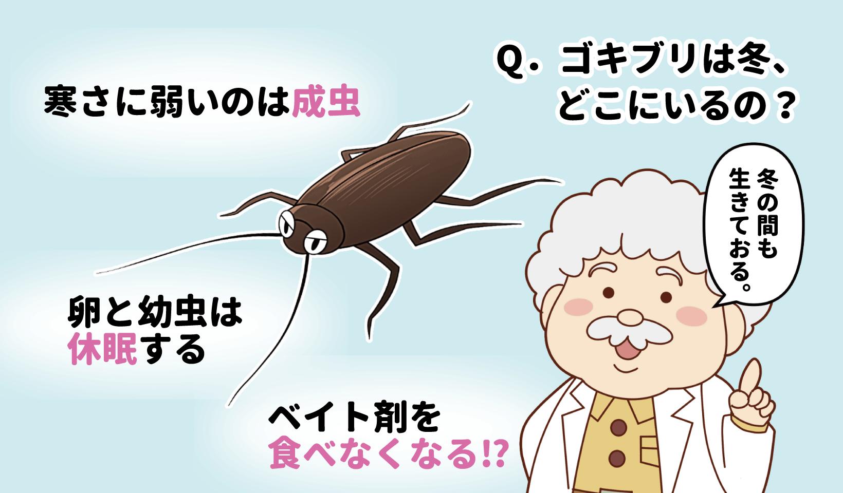 冬のゴキブリの生態を説明するごきた博士