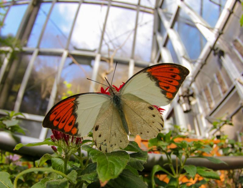 箕面公園昆虫館の放蝶園