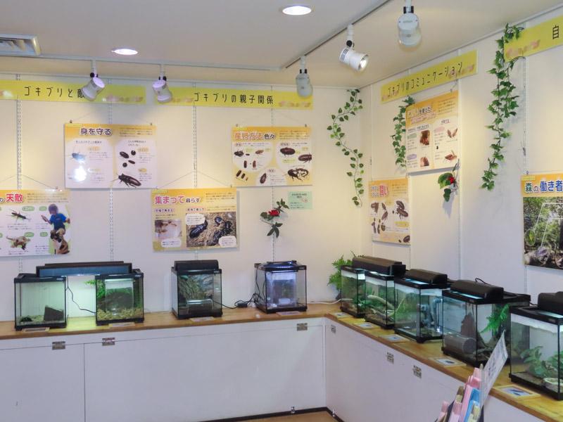 「ゴキブリの生きざま」ゾーンの展示の様子