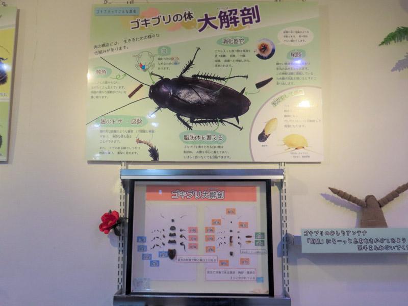 クロゴキブリの解説パネルの写真