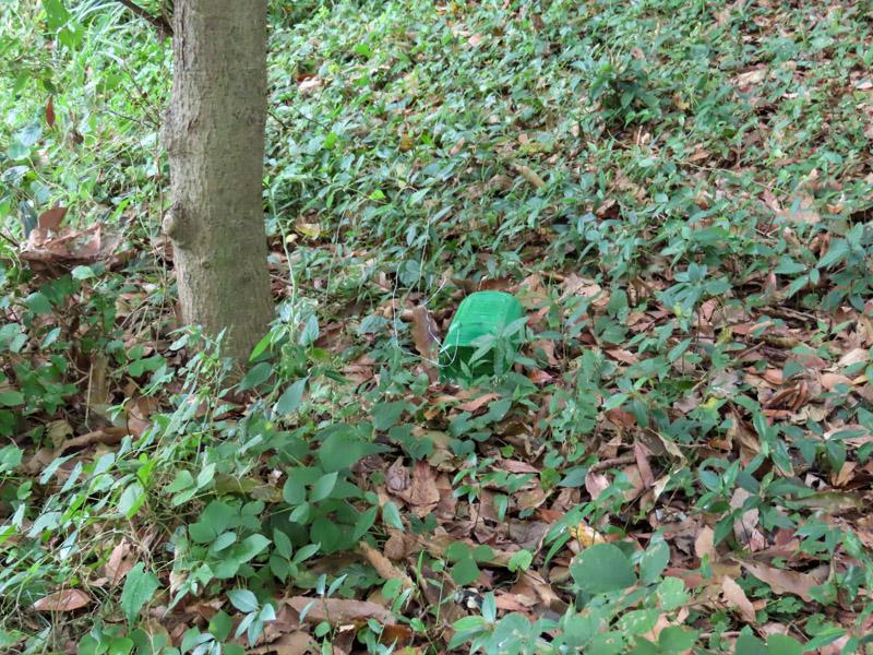 磐田市竜洋昆虫自然観察公園の森林に寝かせて仕掛けたノムラホイホイ
