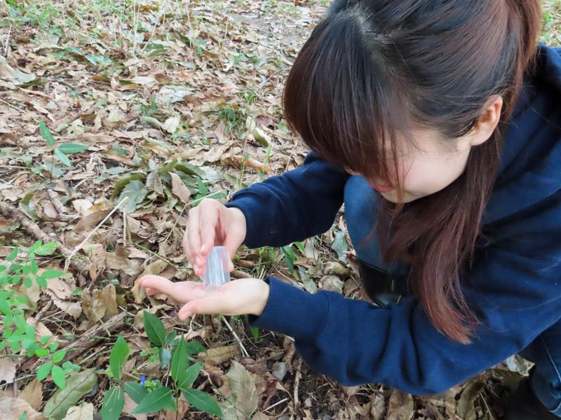 フィルムケースを使ってモリチャバネゴキブリを採集する和田