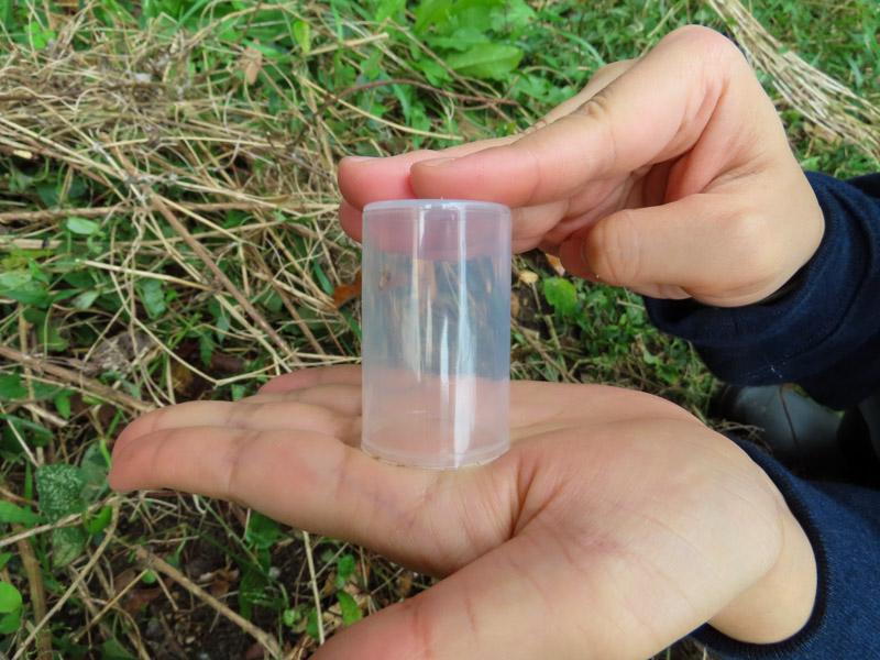 フィルムケースの中に入っているツチゴキブリ
