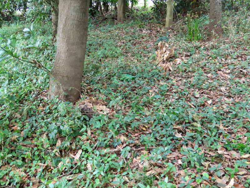 磐田市竜洋昆虫自然観察公園内の森林