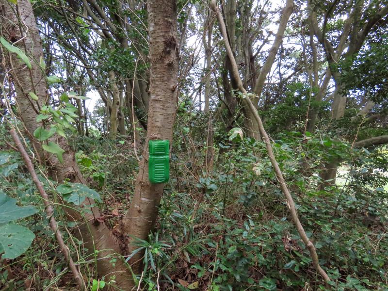 磐田市竜洋昆虫自然観察公園の木にノムラホイホイを仕掛けた様子