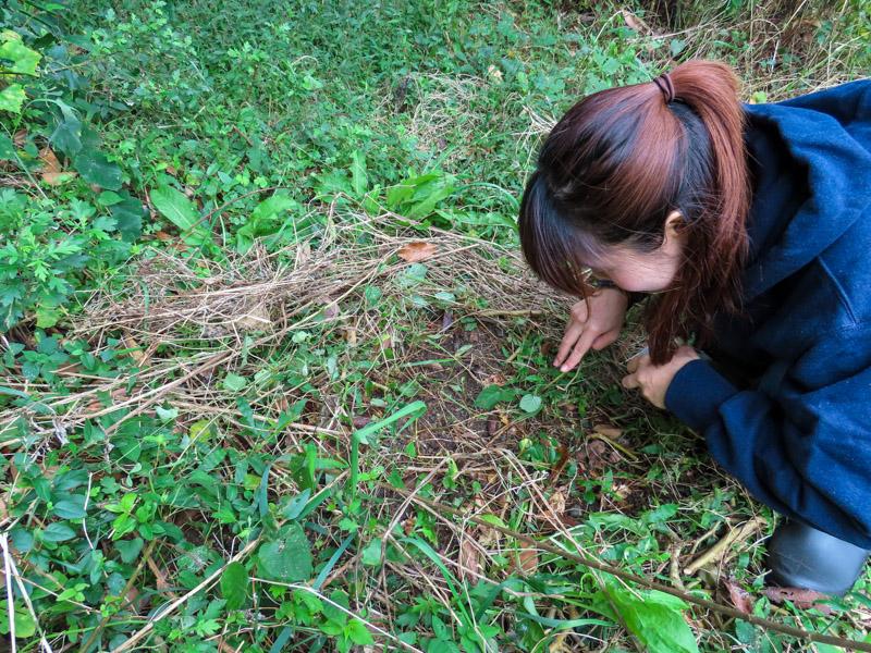 磐田市竜洋昆虫自然観察公園の森林でツチゴキブリを探すゴキラボ編集部の和田