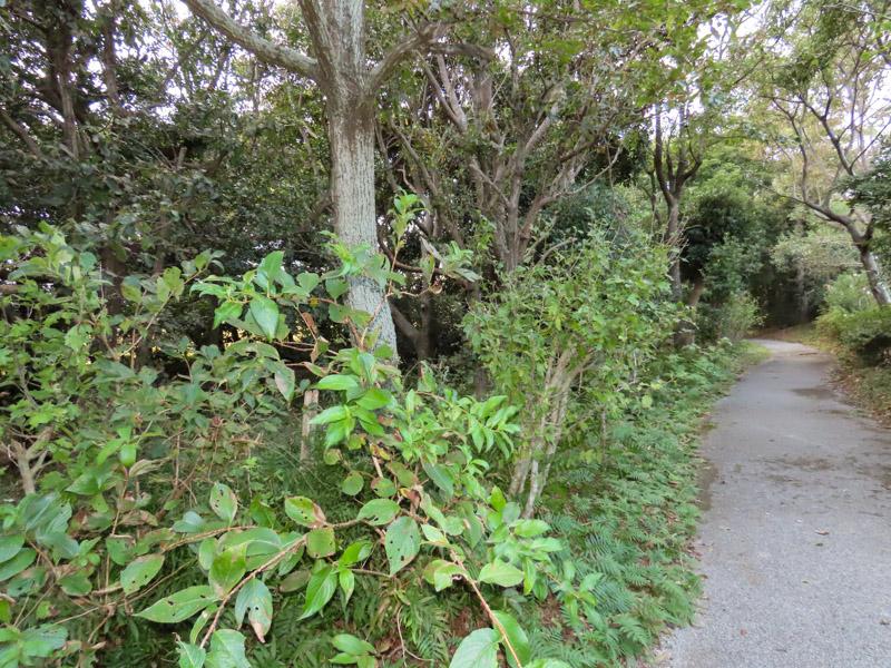 磐田市竜洋昆虫自然観察公園内にある森林