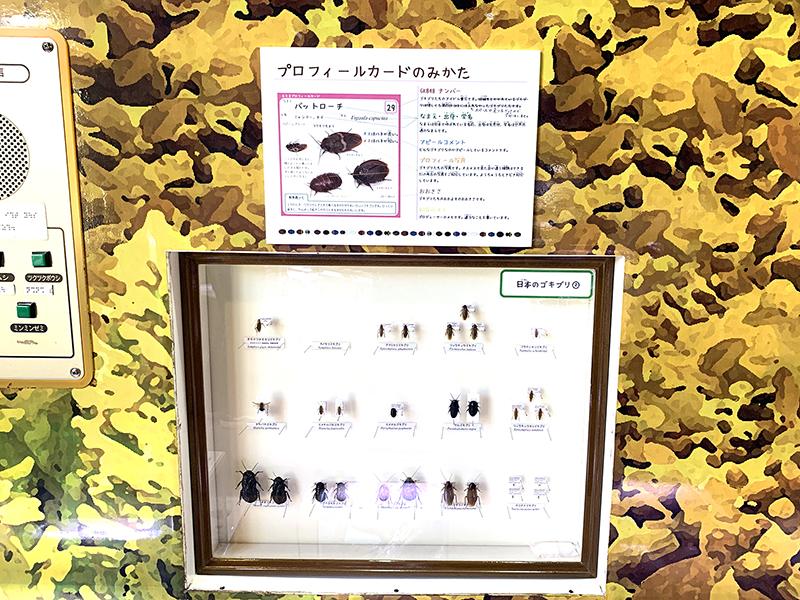 日本のゴキブリの標本