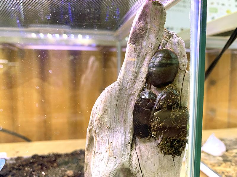 エジプトサバクゴキブリの展示ケース