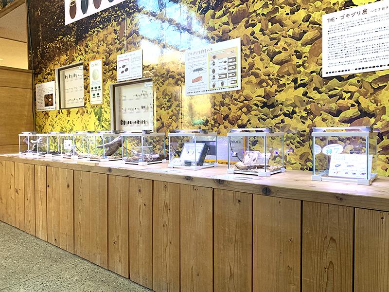 昨年のゴキブリ展で人気投票7位に入賞したゴキブリの展示