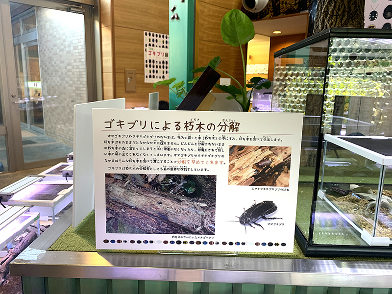 ゴキブリによる木の分解を紹介するパネル展示